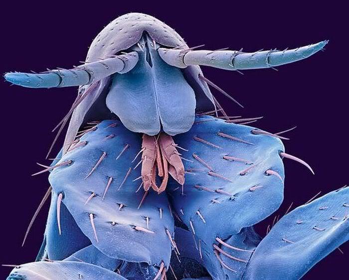 electro_microscope-flea