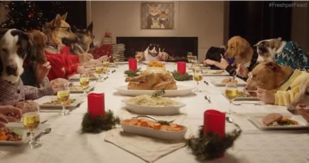 pet feast