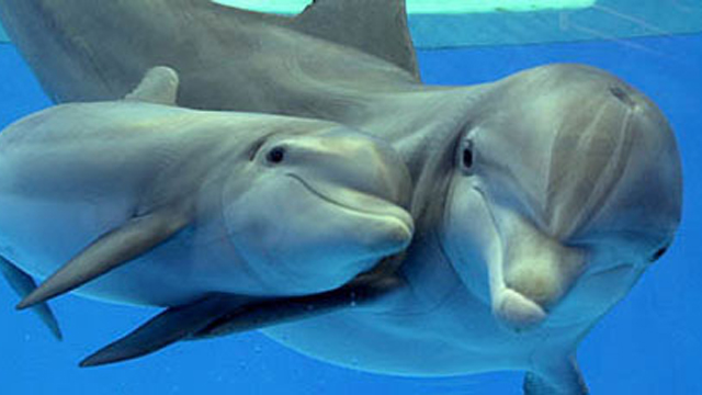 Baby-dolphin-pic