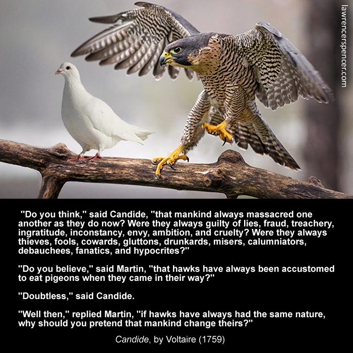 dove-hawk